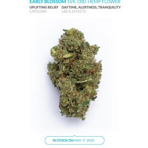 Early Blossom – Premium Hemp Flower – 3.5 g